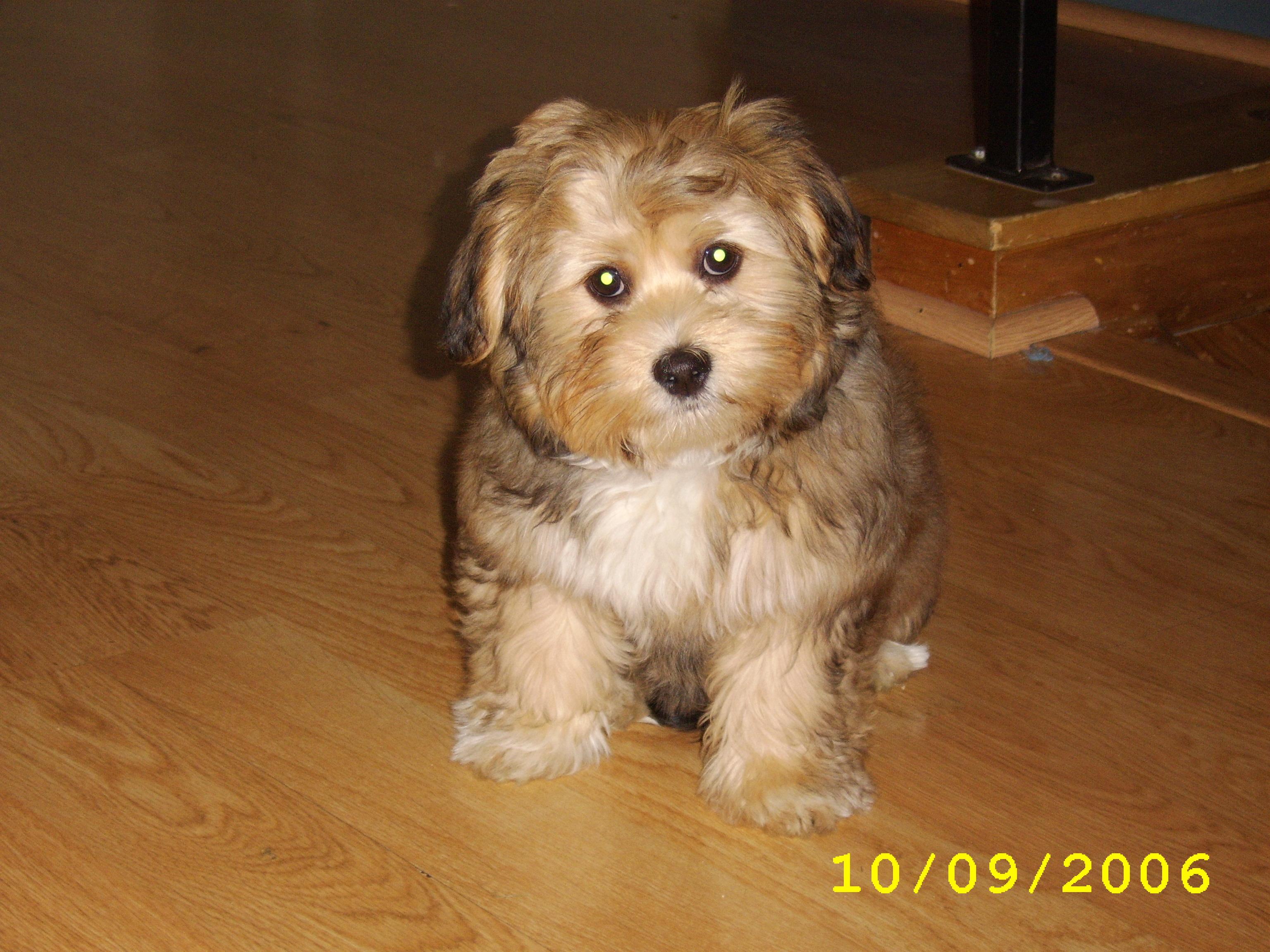 Sophie Puppy